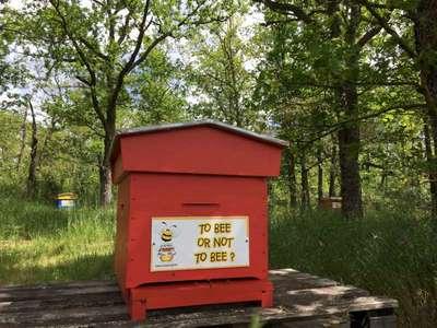 Small parrainer une ruche