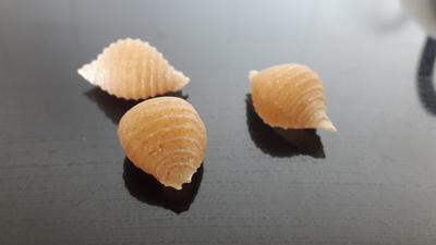 Small coquillages